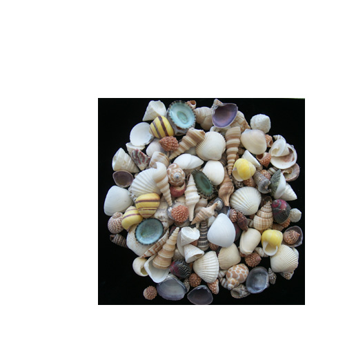 SEASHELL MIX - SMALL